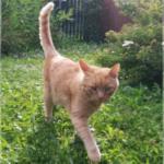 Kater Timo im Garten